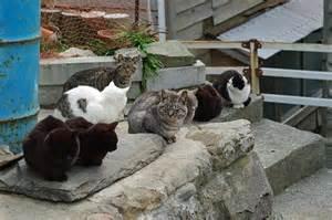 cat island cat island tashirojima in japan 171 your screen