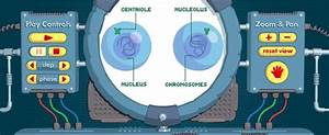 49 Best Images About Biology  Meiosis On