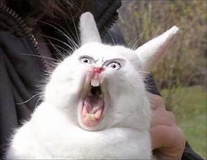 Zfrustrowany królik ☺ LOLX - śmieszne zdjęcia