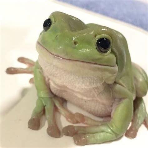 frog wallpaper aesthetic