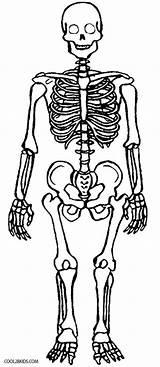 Skeleton Coloring Pages Anatomy Printable Skull Human Skeletons Bones Sheets Cool2bkids Books sketch template