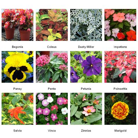 what are annuals common annuals