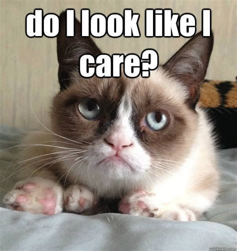 Thanksgiving Cat Meme - 17 best images about memes on pinterest kevin hart grumpy cat and funny thanksgiving meme