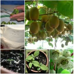 growing pot plants from seeds how to grow apple trees from seed