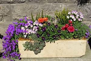 Blumenkübel Bepflanzen Sommer : blumenkasten kaufen die wichtigsten infos tipps ~ Eleganceandgraceweddings.com Haus und Dekorationen