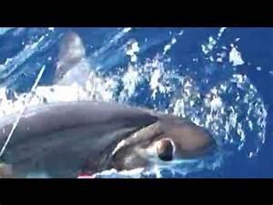Swordfish? Giant eyeball mystery may be solved ...