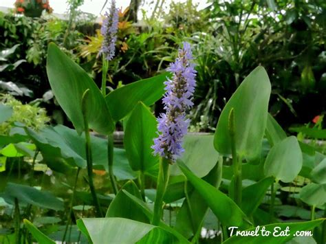 what do water lilies eat orchids and water lilies wellington botanic gardens wellington new zealand travel to eat