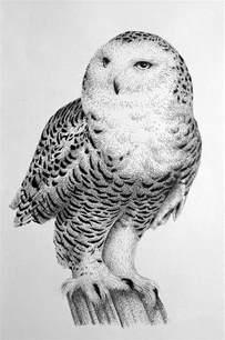 Snowy Owl Pencil Drawing