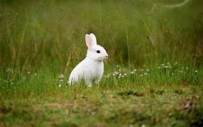 Wallpapers Rabbit Bunny Desktop Bunnies Rabbits Windows