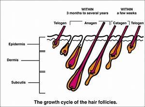 Brazilian Laser Hair Removal Is It Worth It