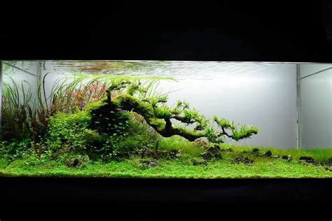 The Best Aquascape by Best Aquascapes Of 2013 Aquascaping World Forum