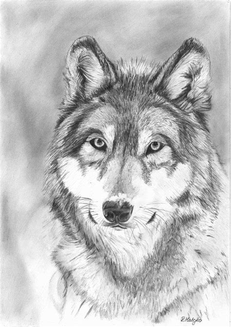 wolf drawings  pencil wolf pencil drawings pencil