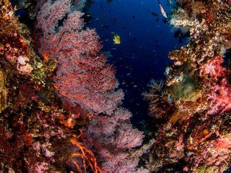 tauchplaetze  raja ampat raja ampat biodiversity eco resort