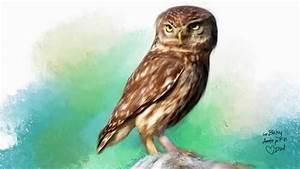 Animal, Kingdom, Predators, -, The, Small, Owl