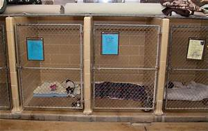 Active volunteer force keeps dog deaths down toledo blade for Puppy dog kennels