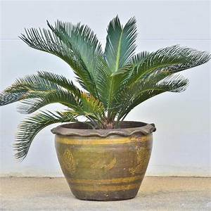 Plante D Extérieur En Pot : plante pour v randa liste ooreka ~ Teatrodelosmanantiales.com Idées de Décoration