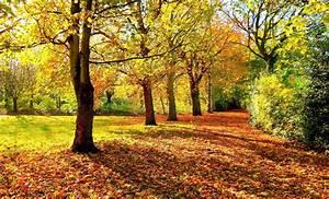 Autumn forest trees road landscape e wallpaper | 2000x1210 ...