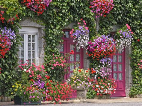 flowers for the house 59 front door flower and plant ideas