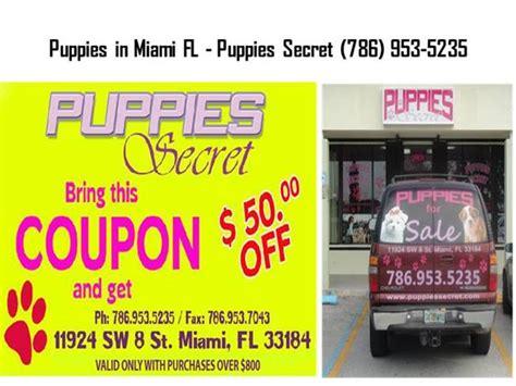 puppy stores in miami fl authorstream
