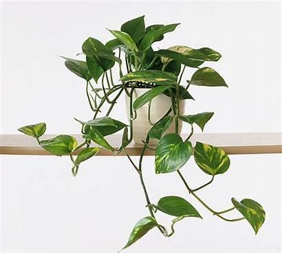 Houseplants Plant Alive Spider Keep Easy Basically