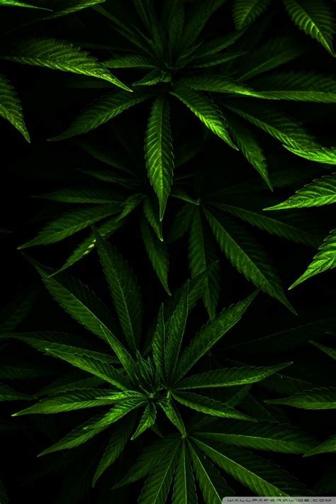 Weed Iphone Wallpapers Group (59