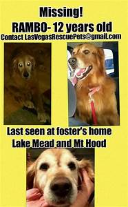 Golden retriever rescue of southern nevada animal rescue for Dog rescue las vegas nv