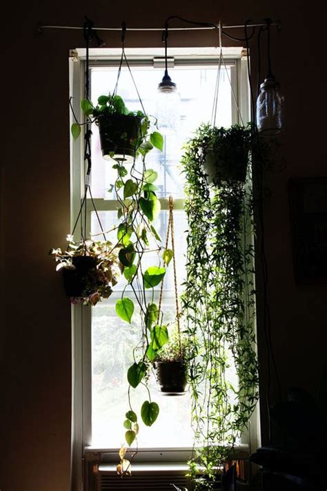 Plant Window by 17 Best Ideas About Window Plants On Apartment