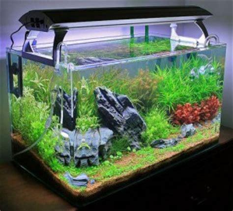 faire un aquarium d eau douce aquariophilie convertir un aquarium d eau douce en bac r 233 cifal animogen