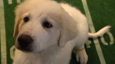 rise   national anthem puppy bowl animal