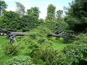339 best giuseppe penone images on pinterest With jardin a la francaise photo 5 arbre des voyelles penone