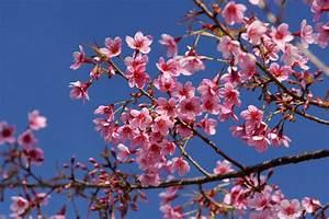 Welche Blumen Blühen Im Mai : chiang mai die oase des nordens ~ Eleganceandgraceweddings.com Haus und Dekorationen