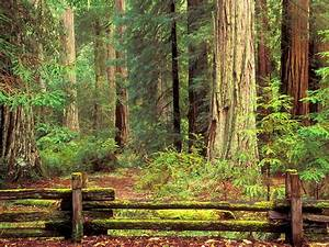 Sentinels of Time Big Basin Redwood State Park California ...