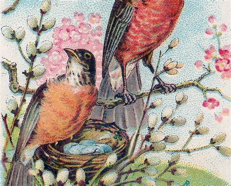 vintage robins nest image  graphics fairy