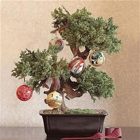 chinoiserie chic a bonsai christmas tree