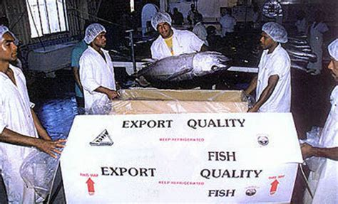 agricultural equipment manufacturer in maldives yellowfin tuna maldives trading company aquatic products processed food products