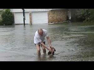Dog rescue from Hurricane Harvey 8/2017 For licensing ...