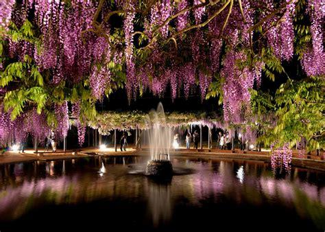 วอลเปเปอร์ : สวน, การสะท้อน, ดอกซากุระ, เบ่งบาน, น้ำพุ ...