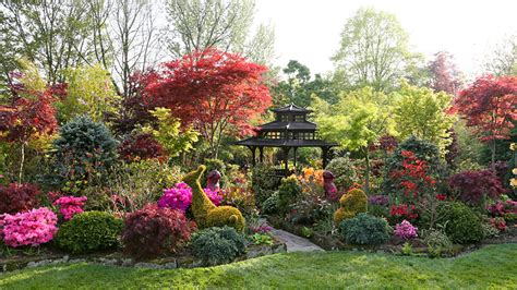 Straeucher Fuer Den Garten by Fotos Natur Garten B 228 Ume Strauch Design
