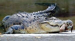 "EATEN ALIVE: Five Killer Croc Attacks – Part Three: ""An ..."