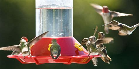 hummingbird feeders top rated glass red