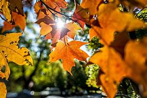 7, Things, To, Do, With, Fall, Leaves