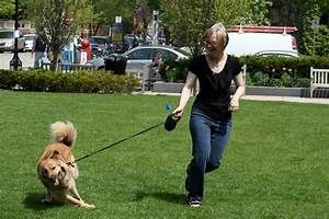 Retractable Leashes Put People and their Pets at Risk ...