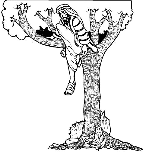 zacchaeus   tree jesus coloring page wecoloringpagecom