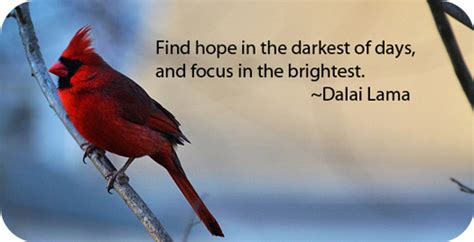 quotes about cardinal birds quotes