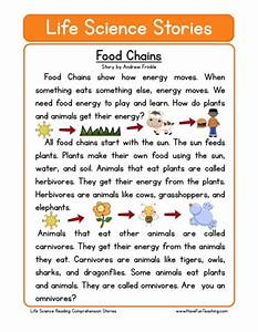 """Search Results for """"Food Chain Worksheet First Grade ..."""