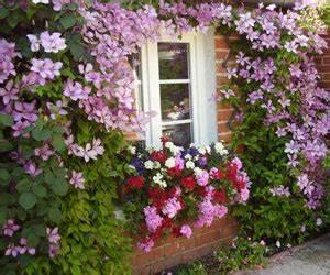 Plantes Grimpantes Mur : plante grimpante pour couvrir un mur ~ Melissatoandfro.com Idées de Décoration