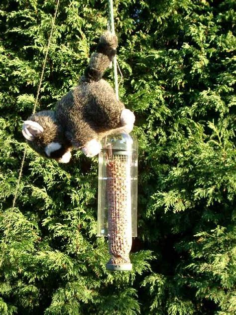 17 best ideas about squirrel proof bird feeders on