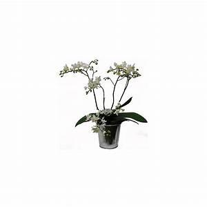 Cache Pot Orchidée : orchid e phalaenopsis blanche en fleurs 5 branches cache pot zinc en fleurs 5 hampes ~ Teatrodelosmanantiales.com Idées de Décoration