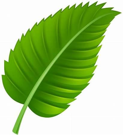 Leaf Clip Leaves Clipart Transparent Clipartpng Web