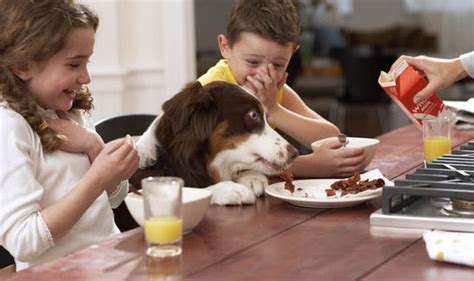 dog eating at table the 50 rules that every household should follow uk